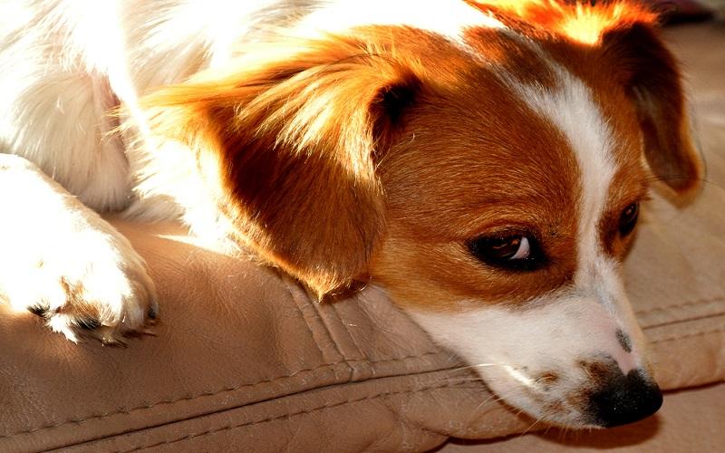 Free-Choice Feeding Dogs